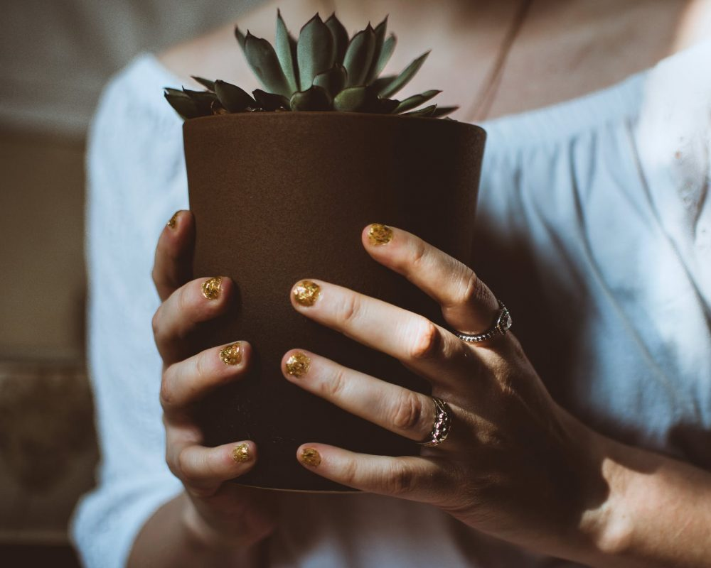 person holding plant pot
