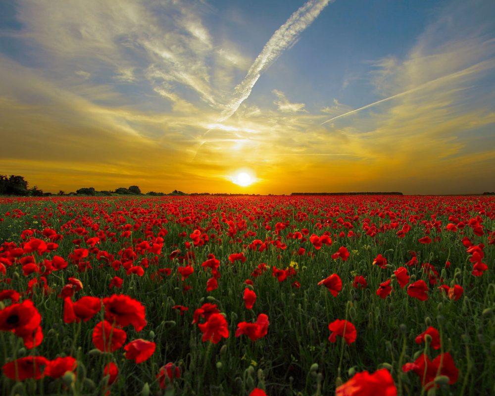 sunset-field-poppy-sun-priroda